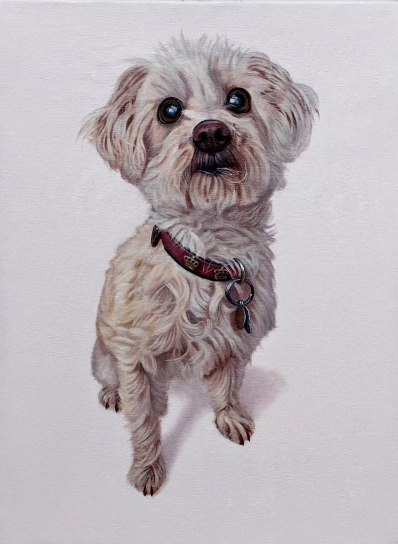 """Cookie"", 12"" x 16"", oil on canvas, 2016"